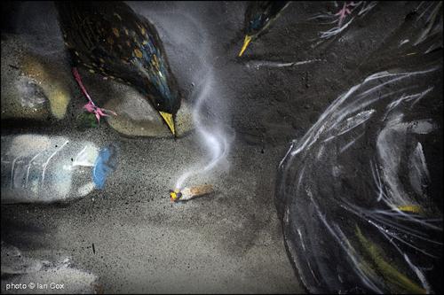 smoking-starlings-web
