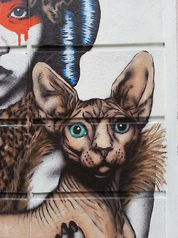 Fin DAC detail cat